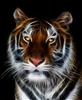 LARGE tiger #3 RV/Wall Decal