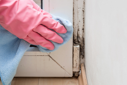 removing mold from wood