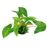 Aquarium Ornament Plastic Plants 4015