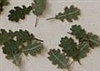 Leaves, Oak - Green Leaves