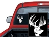 Typical Whitetail Deer Decal