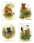 Wee Wildlife Boxed Birthday Cards