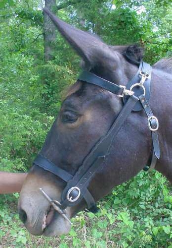 Two Horse Tack - MULE BRIDLES