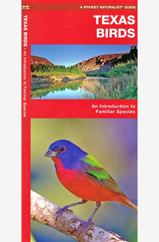 Texas Birds: an introduction to familiar species