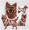 Dogs - Cairn Terrier