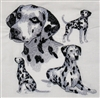 Dogs - Dalmation