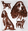 Dogs - English Springer Spaniel (Docked Tail)