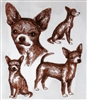 Dogs - Chihuahua - Short haired