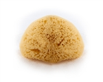 Sea Wool Natural Sea Sponge
