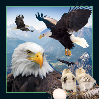 Worth Keeping Eagle 4D Card
