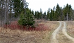 Main, Aroostook County, 5.01 Acres Sunrise Estates. TERMS $140/Month