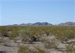 Texas, Hudspeth County, 86.90 Acres El Paso, Lot 3. TERMS $460/Month