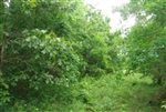 Missouri, Texas County, 5 Acres Whispering Oaks Ranch. TERMS $125/Month