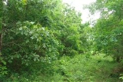 Missouri, Texas County, 5 Acres Whispering Oaks Ranch. TERMS $165/Month