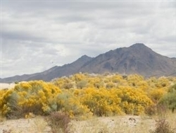 Nevada, Humboldt County, 80 Acres Near Winnemucca. TERMS $300/Month