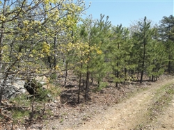 Oklahoma, Latimer  County, 5.92 Acre Pine Mountain Ranch. TERMS $185/Month
