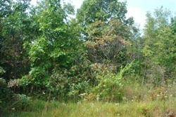 Tennessee, Wayne County, 14.12  Acre Sugartree Falls, Creek, Watefall. TERMS $540/Month
