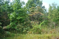 Tennessee, Wayne County, 6.45 Acre Sugartree Falls. TERMS $400/Month