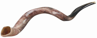 Yemenite Shofar #SHYEM  (Color & shape may vary)