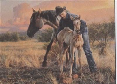 The New Foal by Tim Cox