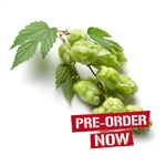 Yeoman Hop Plant in 2 Litre Pot (Pre-Order)