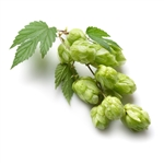Yeoman Bare Root Hop Plant
