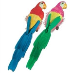 Feathered Parrot