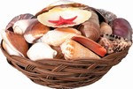 Basket of Seashells