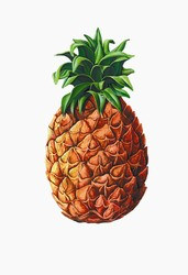 Pineapple Cutout
