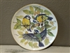 Bird Collector Plate Vintage Eurasian Blue Titmouse - European Songbirds