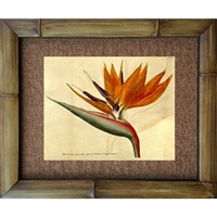 """Bird of Paradise"" Art Print. Circa 1800's. Vintage Hawaiiana. Matted in a Natural Grass Mat and framed in a handmade Natural Bamboo Frame. Bamboo Frame is hand sanded and stained twice. Made in California, USA. Dimensions; Print 11"" x 14"", Natural..."