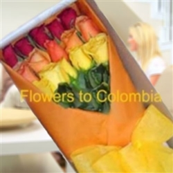 MIXED COLORS ROSES, ROSAS  MIXTAS