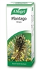 A Vogel Plantago Lance 50ml