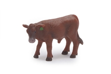 Red Angus Calf
