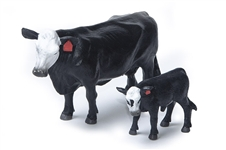 Black and White Face Cow and Calf Pair