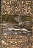 River on the Rocks: A Birch River Story