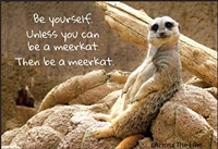 Be yourself. Unless you can be a meerkat. Then be a meerkat.