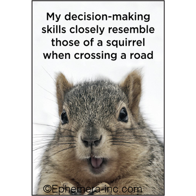 My decision-making skills closely resemble those of a squirrel when crossing a road