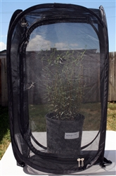 "Black 13.5"" by 13.5"" by 24"" Popup Cage without Vinyl Window"