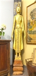 7ft Tall STANDING BUDDHA Statue Laos Teak Wood GOLD GILDED Black Lacquer