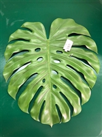 Big Leaf Monstera Stem