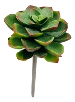 Green Red Succulent