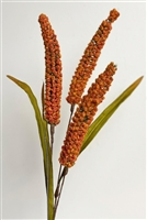Millet Spray Orange