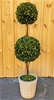 Double Sphere Preserved Boxwood Topiary