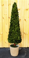 Cone Preserved Boxwood Topiary