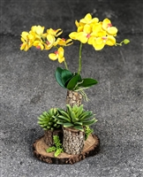 Orchids on Wood Trunk