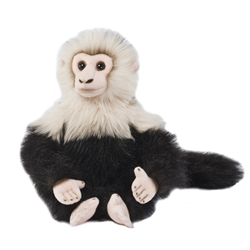 Capuchin Monkey Signature