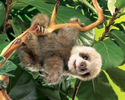 Baby Sloth Puppet