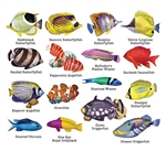 Reef Fish II -  16  Mini Shaped Puzzles  500 Piece Total by Lafayette Puzzle Company