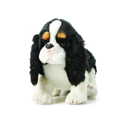 Cavalier King Charles Spaniel from Nat & Jules